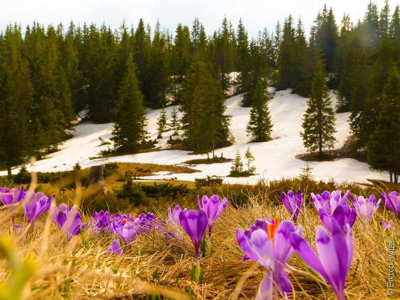 Карпаты весна