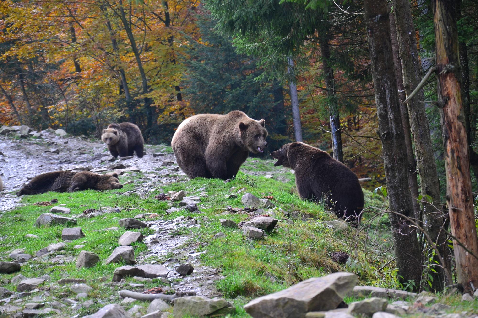 центр реабилитации бурого медведя синевир